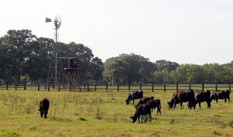 'Atypical' form of mad cow disease confirmed in Alabama cow | AL.com