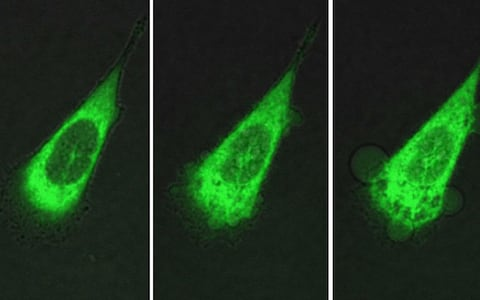 Nanomachines that drill into cancer cells killing them in just 60 seconds developed by scientists