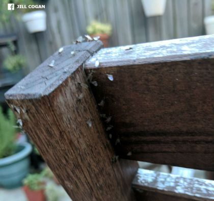 Insects Attack: Swarm Of Bugs Creating Buzz In Philadelphia « CBS Philly