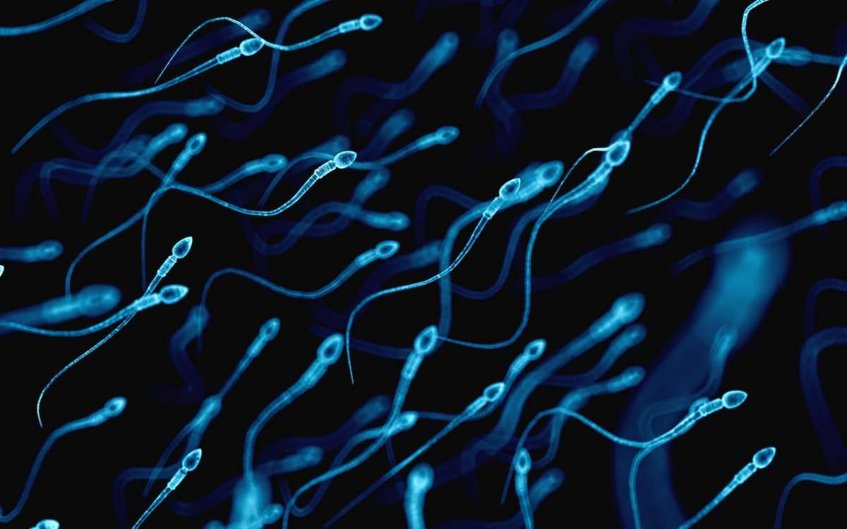 Why the human race could be infertile in 50 years
